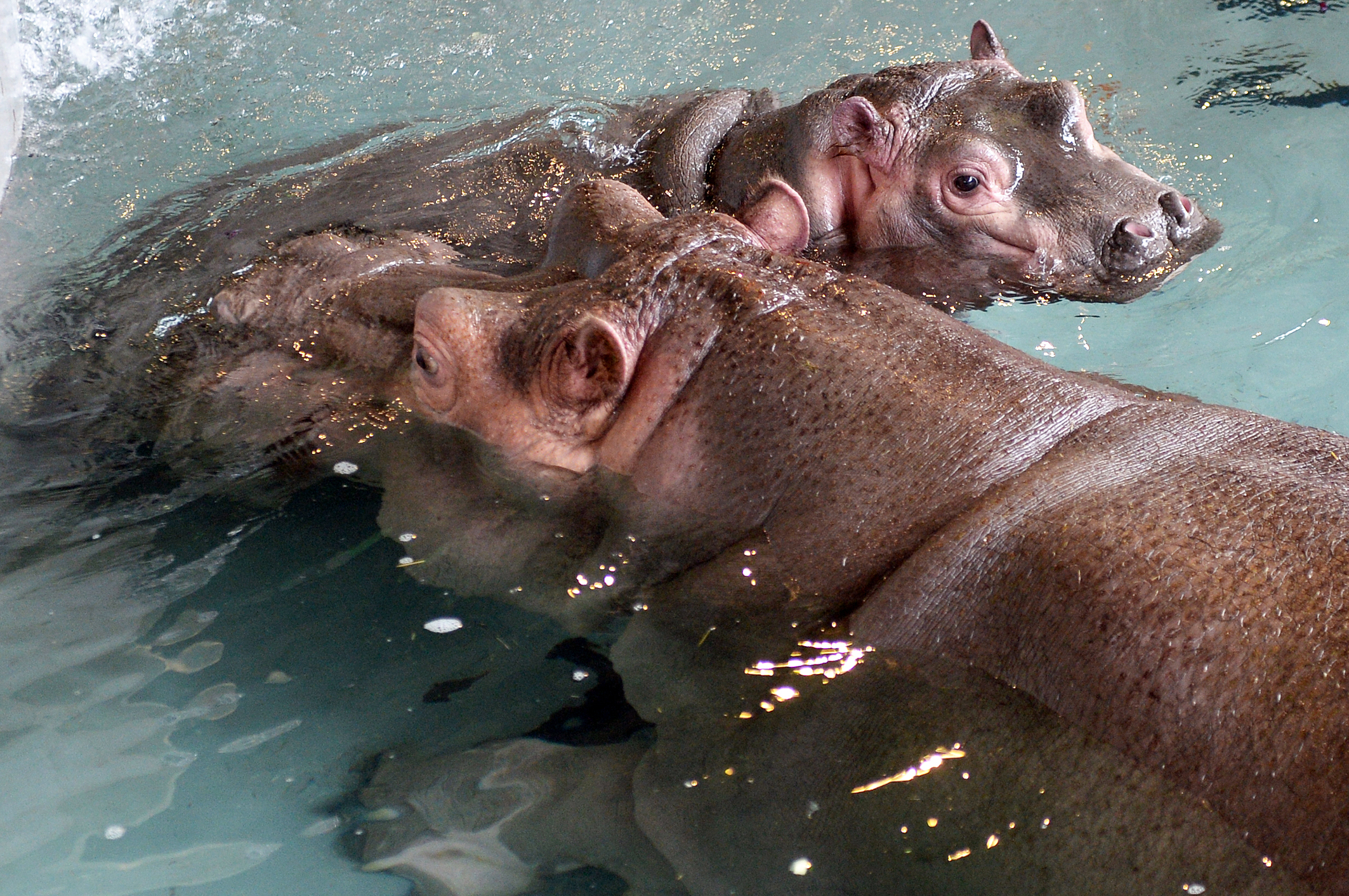 Mother's Day Kisses for baby Hippo